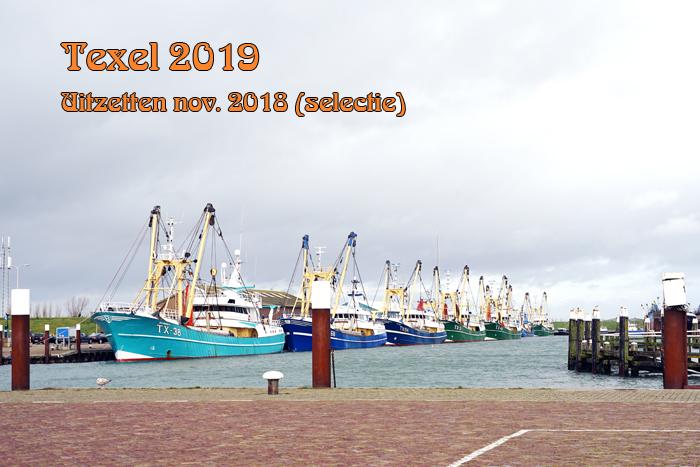 texel 2019